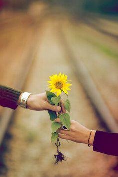 must find sunflower field!