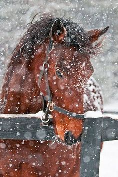 I love to see a beautiful horse and snow falling in huge flakes covering him as if a blanket. The snow falling softly down as feathers upon his mane. His bridle tells me he is loved, soon someone will arrive to release him and walk him into a warm shed dimly lit by the lattern light till the skies turn blue once again. Such gentle loving creatures I so long to own one. To feel the breeze against my face as he gentle gallops into the wind. Joyce Poppen