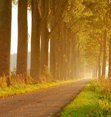 poplar lane in morning light