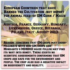 Countries that have Banned GMO Cultivation in EU Corn Maize, European Countries, Infographics, France, Cosmetics, Foods, Education, Country, Food Food