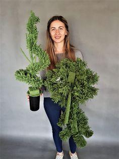 Funeral, Deco, Plants, Advent, Decor, Deko, Plant, Decorating, Decoration