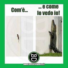 Realtà VS Immaginazione Tagga i tuoi amici e #condividi #bastardidentro #ciccodrillo #lucertola www.bastardidentro.it