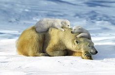 Geniales fotos de Steve Bloom (http://www.stevebloom.com/) de la vida animal
