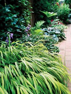 Hakone grass is one of few ornamental grasses that thrive in shade. Its mounding clumps of arching, grassy leaves gradually increase in size, never becoming invasive.