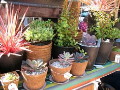 Different style planters. http://farm7.static.flickr.com/6133/6027460534_3a097354ef_z.jpg