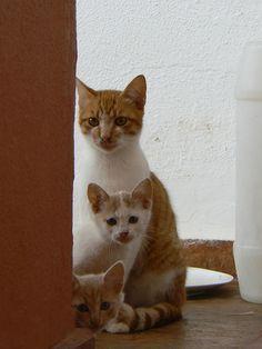i love orange cats Baby Animals, Funny Animals, Cute Animals, Orange Cats, White Cats, Gatos Cats, Curious Cat, Mundo Animal, Pretty Cats