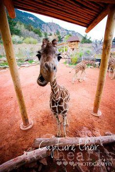 Cheyenne Mountain Zoo - Colorado Springs, CO - Kid friendly activit... - Trekaroo