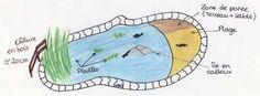 bassin tortues aquatiques