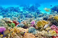 Výsledok vyhľadávania obrázkov pre dopyt korálové utesy foto