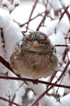 Winter fluffy
