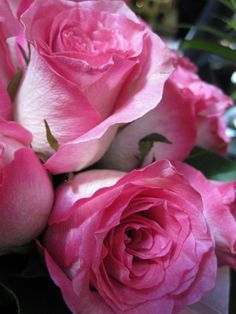 I love all the beautiful colors of roses.  Gorgeous!