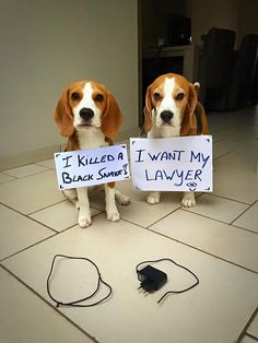 #lawyer #cellphone charger #funny #puppy #cute