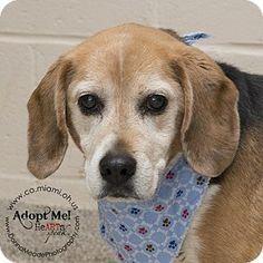 beagle puppy rescue columbus ohio
