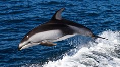 dolphin photography wallpaper free