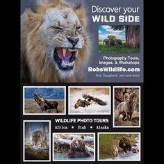 Let's go to Africa !!! Joined me for 10 action-packed wildlife adventure days in Tanzania Africa.  #africa #african #africansafari #lion #hippos #hippopotamus #giraffe #leopard #capebuffalo #cheetah #serengeti #tanzania #ngorongorocraternationalpark #actionpacked #adventure #adventureisoutthere #adventuretime #adrenaline  http://ift.tt/1PSxMR6  #animals #animalsofinstagram #animallover  http://ift.tt/1PSxMR6