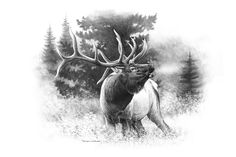 Steps for Portrait Drawing with Charcoal - Drawing On Demand Elk Drawing, Antler Drawing, Hunting Drawings, Hunting Tattoos, Wildlife Tattoo, Wildlife Art, Elk Bugle, Elk Pictures, Elk Silhouette