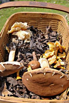 Must learn how to identify any edible mushrooms in my area beyond the morel #foraging