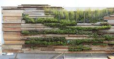 vertical garden with reclaimed wood slats
