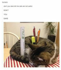 Funny cat memes - posts animals - lounare don't you dare tell me cats Funny Animal Jokes, Funny Animal Pictures, Cute Funny Animals, Animal Memes, Cute Baby Animals, Funny Cute, Cute Cats, Cute Pictures, Hilarious Memes