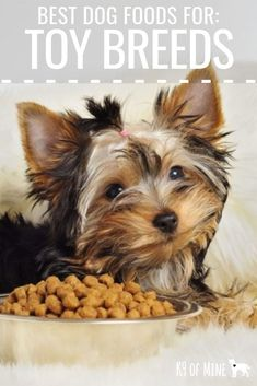 Best Dog Food For Toy Breeds: Nutrition For Pint-Sized Pooches. Discover the best kibble for your tiny pup! Dog Training Methods, Basic Dog Training, Dog Training Techniques, Training Dogs, Best Puppy Food, Toy Dog Breeds, Toy Dogs, Puppy Obedience Training, Dog Nutrition