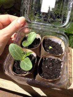 Easy homemade reuse greenhouse for raising seedlings!