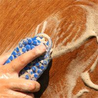 Tips on How to Best Bathe Your Horse Horse Shampoo, Dog Shampoo, Horse Mane, My Horse, Horse Feed, Crazy Horse, Horse Riding, Dressage, Horse Grooming Supplies