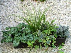 Bepflanzter Balkonkasten 60 x 30 wintergrün