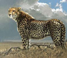 Cheetah by Fuz-Caforio-Art.deviantart.com on @deviantART