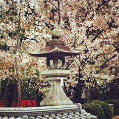 #japan #kyoto #sakura #japantravel #pupuru #wifirental