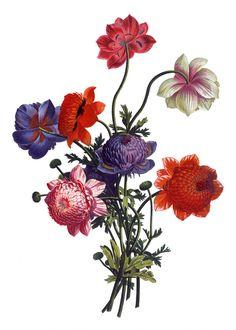 Vintage Flowers Drawing Drawn Vintage Flower Floral - Pencil And In Color Drawn Vintage - Drawings Nocturnal Botanical Flowers, Botanical Art, Gulab Flower, Flower Bouquet Drawing, Decoupage, Flower Art Images, Botanical Drawings, Plant Illustration, Floral Illustrations