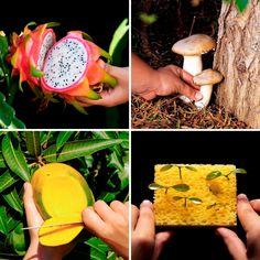 garden design Vegetable videos - Dale a tus plantas una segunda vida