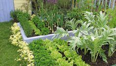 Store fordeler med å dyrke grønnsaker i høybed: Det kreves kun begrenset plass, men gir mulighet for et stort utbytte og en lang sesong, i tillegg er den grei å stelle.