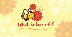 What Do Bees Eat? Honey And Co, Pure Honey, Natural Honey, Raw Honey, Honey Mead, Bee Do, Creamed Honey, Honey Syrup, Honey Face