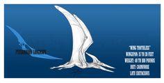 Pteranodon longiceps by BlueCea.deviantart.com on @DeviantArt