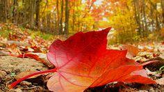 10 Breathtaking Leaf Wallpaper for DesktopPhotography Heat ...