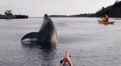 Delfiinitkin käyvät Ruotsissa.