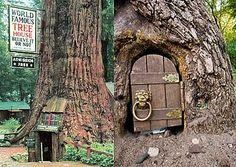 World famous tree house!