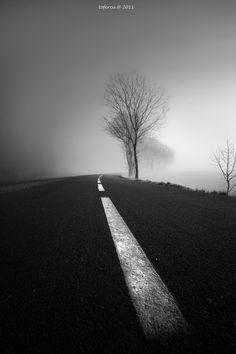 *in the mist