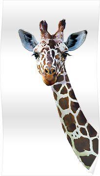 'Giraffe' Poster by lauragraves Giraffe Decor, Giraffe Art, Cute Giraffe, Giraffe Drawing, Giraffe Painting, Giraffe Tattoos, Baby Tattoos, Animal Sketches, Animal Drawings