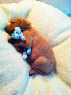 Sleeping with his blue buddy
