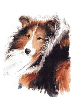 Watercolor 'Sheltie' by Debra Jones;   puts me in mind of beloved and departed Flossie.
