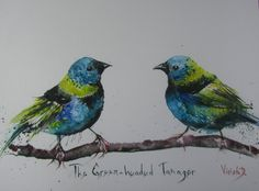 ARTFINDER: The Green-headed Tanager (Tangara sel... by Violeta Damjanovic - The Green-headed Tanager (Tangara seledon) is painted in watercolor technique, on 425 gsm watercolor paper Hahnemühle, size approx. 28x32 cm.