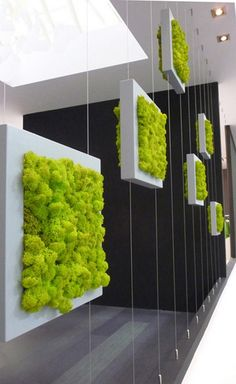 With the increase in the trend of vertical garden in home decoration, moss wall art and graffiti are also favored. Vertical gardens & moss walls are the best home decoration trick to turn out your home into a miniature farm. Wall Design, House Design, Display Design, Chicken Wire Frame, Moss Wall, Vertical Gardens, Plant Wall, Shade Garden, Indoor Garden