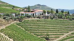 In Pinhao, Portugal, Quinta Nova Luxury Winery House guests can arrive by rail or ship and join rail and cruise excursions.  http://www.travelweekly.com - August 2015  A view of the winery house in the Douro River valley near Pinhao. Photo Credit: Nadine Godwin