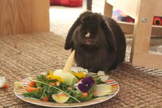 Bunny gets a special meal for his birthday - June 13, 2013 - More at the link http://dailybunny.org/2013/06/13/bunny-gets-a-special-meal-for-his-birthday/ !