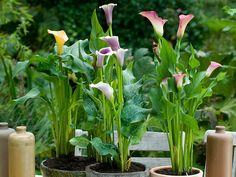 Beskärningskalender för trädgården hela året | Wexthuset