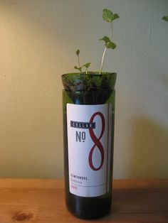 wine bottle hydroponic mint