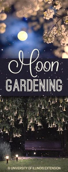 Why enjoy your garden only at night? Create a moon garden for a nighttime haven!