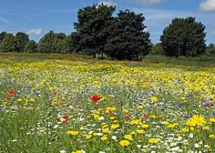 Walk through a flower filled meadow and lie amongst the flowers and make shapes in the clouds.