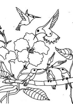 Hummingbirds for Kids Fun Facts and Activities Coloring For
